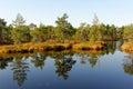 Bog pools in saara estonia Stock Photos