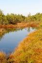 Bog pools in saara estonia Royalty Free Stock Photo