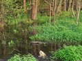 Bog at spring time evening scenery showing a swamp in southern germany Royalty Free Stock Images