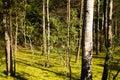 Bog. Summer Stock Images