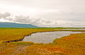 Boglands on a cloudy day bogs along the western brook pond trail in gros morne national park Royalty Free Stock Photography