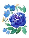 Hand drawing boho watercolor floral illustration with blue flowers, branches, leaves