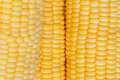 Boil corn fresh sweet close up Stock Image