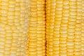 Boil corn fresh sweet close up Stock Image