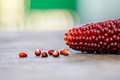 Boiled corn cobs, brown red color Maize seeds macro view. Shallow depth field close-up photo, selective focus. Soft Royalty Free Stock Photo
