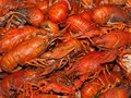 Boiled crawfish Stock Image