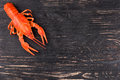 Boiled crayfish on an empty dark wooden background Royalty Free Stock Photo