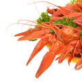 Boiled crayfish with parsley Stock Images