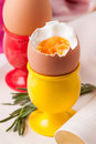 Boiled eggs and rosemary Stock Image
