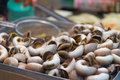 Boiled pond snail closeup or marsh as korean traditional street food Royalty Free Stock Photos