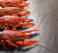 Boiled red crawfish ready to eat. Beer snack. Crayfish to beer. Red boiled crayfish on stone slate dark background. Royalty Free Stock Photo