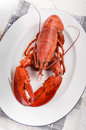 Boiled red lobster on an oval plate Royalty Free Stock Photo