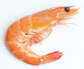 Boiled shrimp Royalty Free Stock Photo