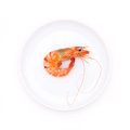 Boiled shrimp in dish on white background Royalty Free Stock Images