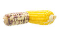 Boiled waxy and cooked corn on white background Stock Photography