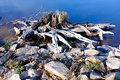 Bois, pierres et Royalty Free Stock Photo