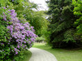 Boise city park the color and fragrance of lilacs welcome spring time to a in idaho Stock Photography