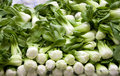Bok Choy, Chinese vegetable Royalty Free Stock Photo