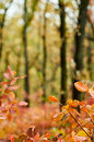 Bokeh background bordered with autumn leaves Royalty Free Stock Photo