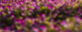 Bokeh bloke pictures background bright pink flowers taken from Royalty Free Stock Photos
