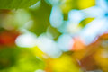 Bokeh blurred foliage on background of sky Stock Images