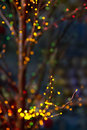 Bokeh on the branches over dark background Stock Image