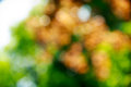 Bokeh out of focus leaves resulting a beautifull Royalty Free Stock Photography