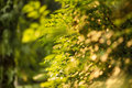Bokeh trees green sunshine romantic countryside Stock Image