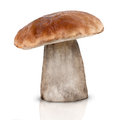Boletus edulis on white background Stock Images