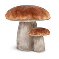 Boletus edulis on white background Stock Image
