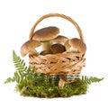 Boletus mushrooms in a basket Stock Photo