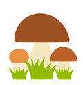 Boletus mushrooms family vector illustration Stock Photos