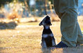 Bond of love,affection & loyalty between a puppy dog & a man Royalty Free Stock Photo
