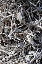 Bones background Royalty Free Stock Photo