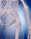 Bones of the hip medically accurate illustration Royalty Free Stock Photos