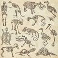 Bones And Skulls Of Different ...