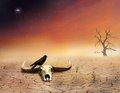 Bones in ther desert view of an cow skull and a raven on the hot Stock Photo