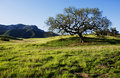 Boney mountain Royalty Free Stock Image