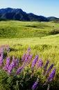 Boney mountain Royalty Free Stock Photography