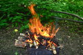 Bonfire burning in the forest Royalty Free Stock Photography