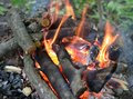 Bonfire close up of a with orange flames and firewood Royalty Free Stock Photos