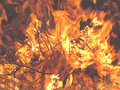 Bonfire Flames close-up Royalty Free Stock Photo