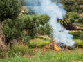 Bonfire land clearing in greek village olive grove greece Royalty Free Stock Images