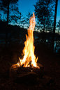 Bonfire night in the woods Royalty Free Stock Photo