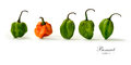 Bonnet peppers panorama creative image of assorted scotch with soft shadows against a white background copy space Stock Images