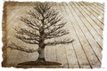 Bonsai background deciduous tree against wood Stock Photo