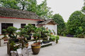 Bonsai in countryside yard the front of a farmhouse chengdu china Stock Photo