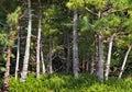 Bonsai forest Fotografering för Bildbyråer