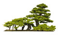 Bonsai plant on white background Royalty Free Stock Photos