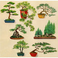 Bonsai plants for color Stock Images